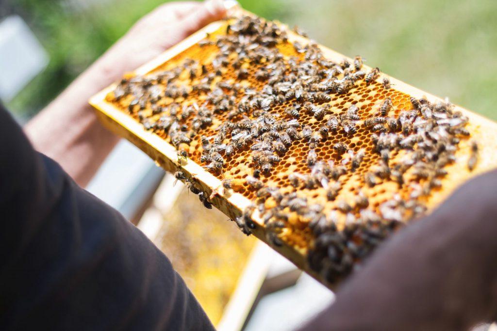 Študijná cesta pre včelárov